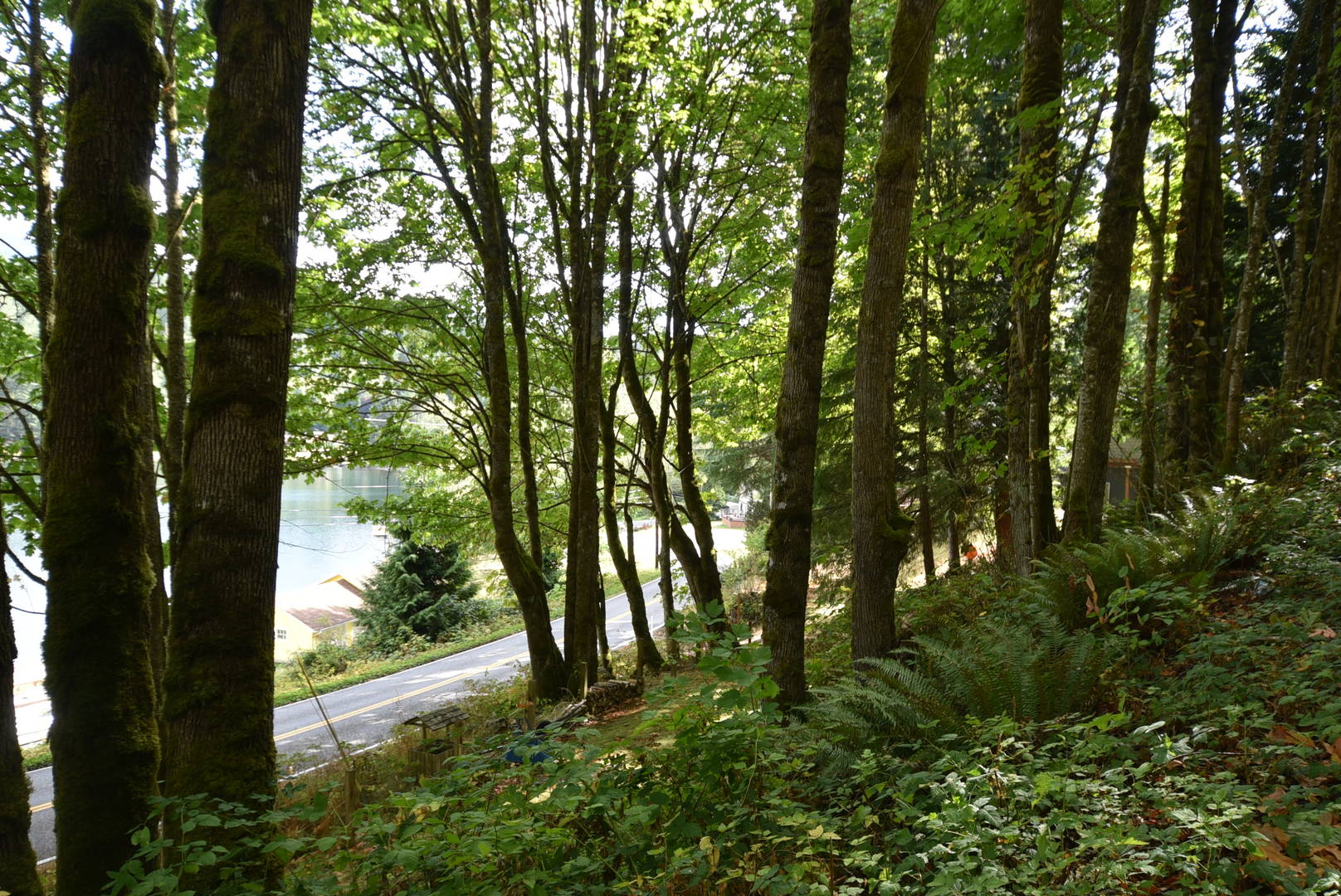 Cain Lake Rd ( Clough)  Sedro Woolley, WA 98284