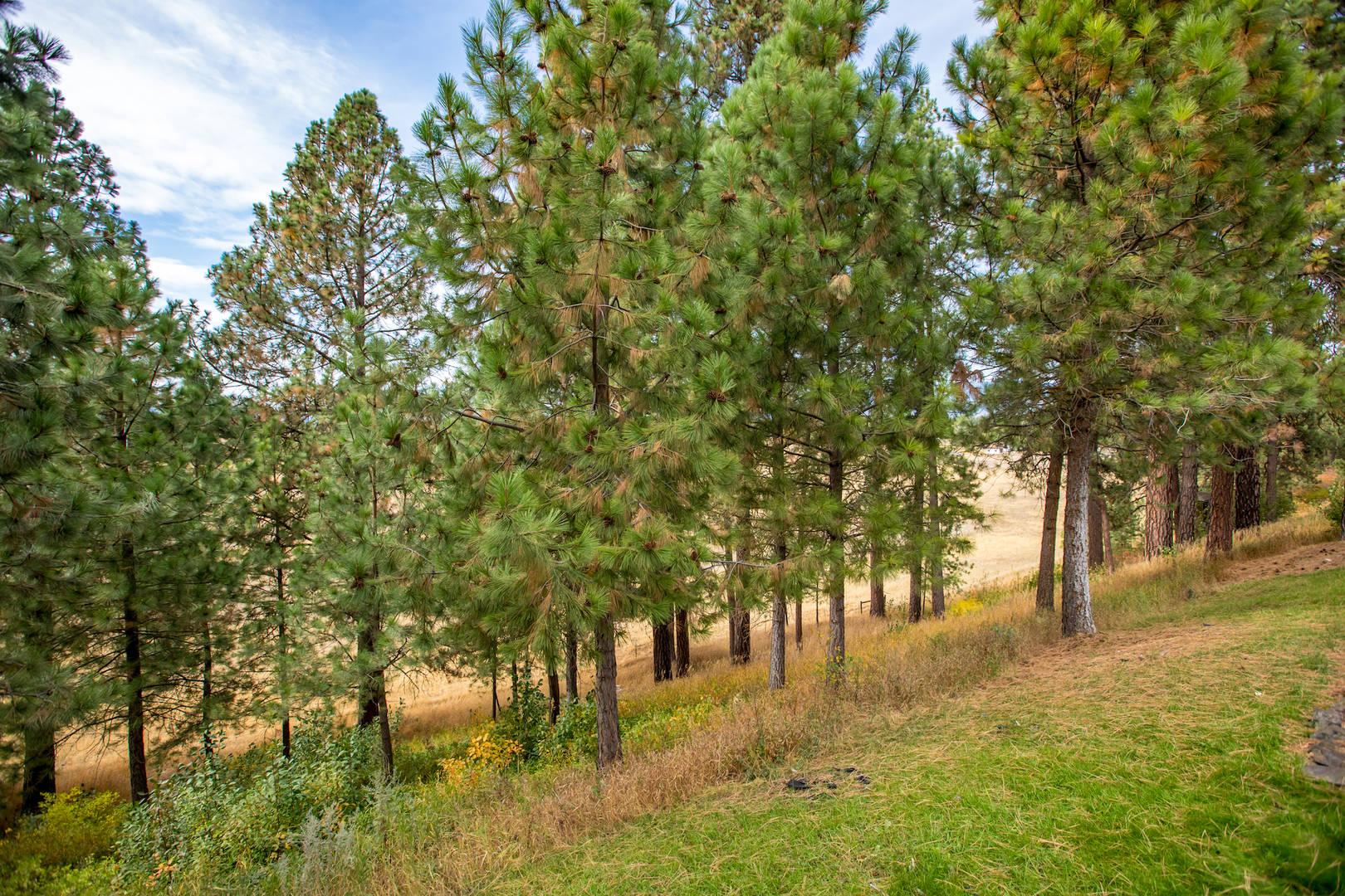 226 S. Hilltop Road Columbia Falls, MT 59912