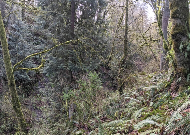 XXXX Waller Rd E Tacoma, WA 98443